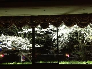 今日の夜桜!